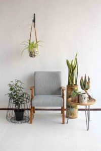 Decorate with Indoor Plants – Incanda Furniture