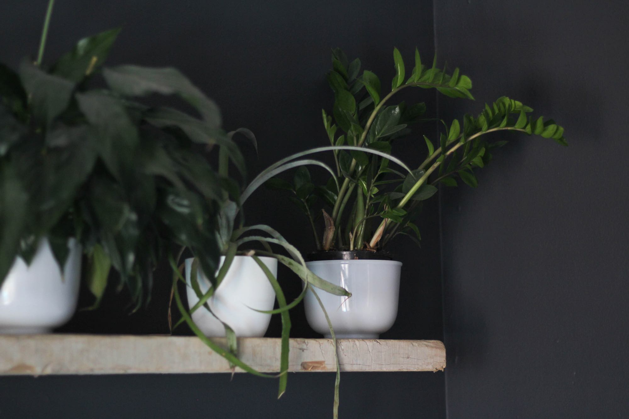 Indoor plants on floating wood shelf